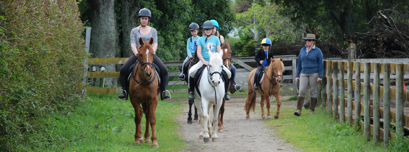 Safe Riding School Ponies
